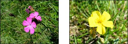 vegetation_image_4